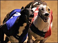 greyhound racing watchdog has launched an investigation