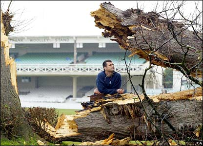 The lime tree at Canterbury cricket ground, which blew down in January