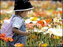 A girl walks among the colourful Iceland poppy fields at Showa Kinen park in western Tokyo, 05 May 2005.