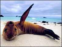 Sea lion (Galapagos Conservation Trust)