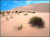 Sand dunes (picture by Lorne Gill/Scottish Natural Heritage)
