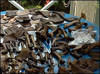 Preserved dodo bones found on the island of Mauritius
