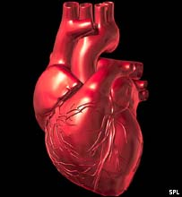 Image of the heart
