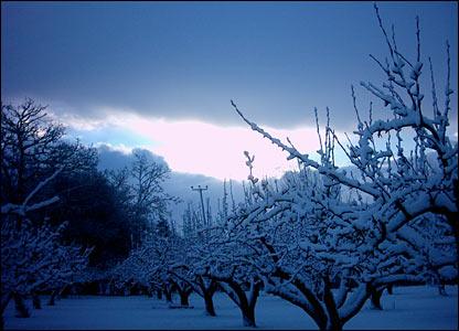Snowfall over Tenterden, Kent