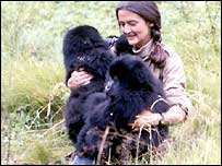Dian Fossey with two gorillas (Copyright: www.dianfossey.org)