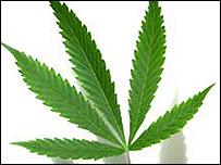 Hoja de marihuana.