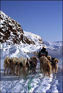 Dogs pulling sledge (picture courtesy of Glenn Morris)
