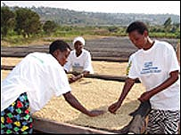 Workers at Rwandan coffee processing firm Ndera