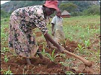 A black farmer in Zimbabwe tills the land
