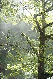 Atlantic oak woodland in Meirionnydd