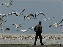 Turkish man walks with birds