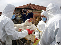 Officials collect chickens for culling in Turkey