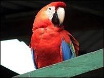 Parrots in garden