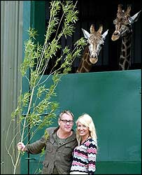Vic Reeves and Nancy Sorrell with two giraffes