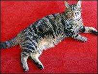 Cat (BBC)