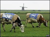 Dutch cows clad in 'boo' banners