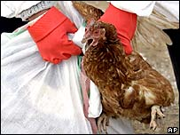 Health officials grab a chicken for culling in Dogubeyazit