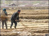 North Korean farmers preparing fields for rice - 20/4/05