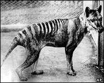 The last known Tasmanian tiger
