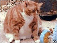 Benji the cat