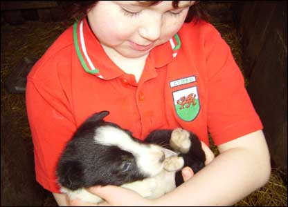 Nicky Acres sent in this shot of her six-year-old niece Jemma Hopkins with a border collie puppy