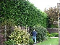 Brian Singleton's garden