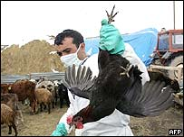 An official collects poultry for destruction in Dogubayazit, eastern Turkey.