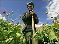 An Afghan opium farmer in his field