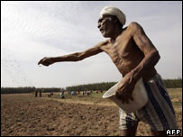An Indian farmer spreading fertiliser