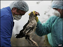Dead bird disposed of in Romania