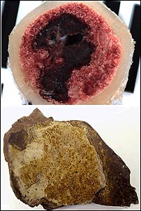 Comparison between medullary bone from a hen and similar layer from a T.rex fossil     Image: Science