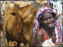 Distraught Kenyan woman with her draught-stricken herd of cows