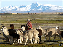 A Bolivian indigenous shepherd in the highlands
