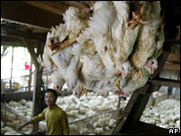Chicken farm near Jakarta, Jan 2006