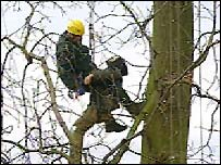 A protester is removed from the tree