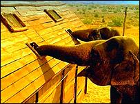 Live elephants used in Shamin Desai's ad for Cobra