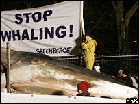 Fin whale in Greenpeace protest outside Japanese embassy in Berlin
