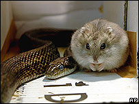Snake and hamster sharing enclosure in Japanese zoo