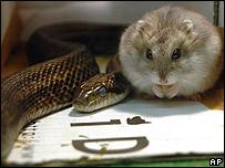 Gohan, el hámster, y Aochan, la serpiente.