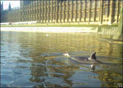 Whale swims past Parliament Buildings