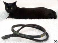 Black Jack and the fan belt