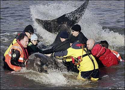 Whale thrashes