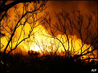 Flames glow behind fire-ravaged trees near Woy Woy, Jan 2006
