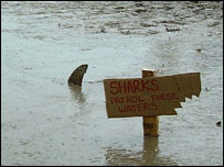 Cardboard 'shark' fin in the mud at Glastonbury