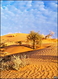Sand dunes in the Kalahari desert, South Africa (SPL)