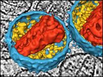 Трехмерное изображение ВИЧ