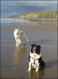 Bethan Rider's dogs Mickey and Marcus enjoying a day out at Ogmore