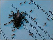 Insects gather on a sheet of paper at The Body Farm