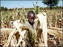 James Murape stands among parched maize crops on a farm near Harare
