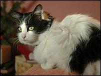 Lost cat (photo courtest of Steve Faragher)